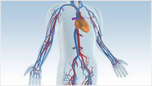 「胸部大動脈瘤」の画像検索結果