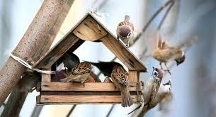 <b>Кормушки</b> своими руками для <b>птиц</b>: интересные идеи воплощения