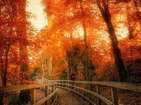 Осень: лучшие изображения (86) | Beautiful landscapes, Beautiful ...