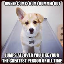 owner comes home bummed out jumps all over you like your the ... via Relatably.com