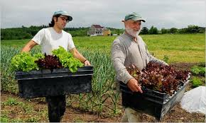 Image result for organic farm