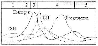 Image result for hormon wanita