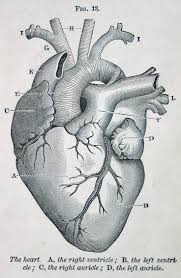 images about anatomy human anatomy andreas the chakra matters of the heart joan hyman friendship oneself is all important because out it one cannot be friends anyone else