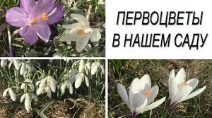 <b>Весенние цветы</b>. Первоцветы в нашем саду. - YouTube