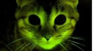 The <b>Glow-In-The-Dark</b> Kitty | Science | Smithsonian