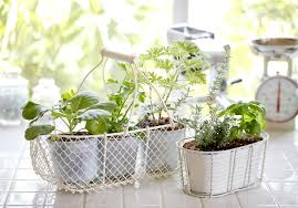 Kitchen Windowsill Herb Garden Green Diy Projects For In And Around The Kitchen Beka Cookware