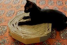 Resultado de imagem para As unhas dos gatos: o que fazer com elas?