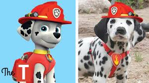 10 <b>PAW PATROL Dogs</b> In <b>Real</b> Life - YouTube