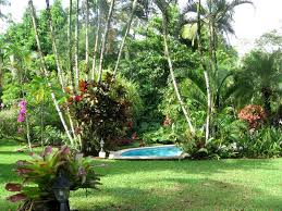 Small Picture Concept Design For Tropical Garden Ideas 21383