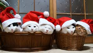 Image result for Santa Claus picture