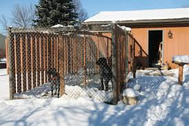How To Build the Perfect Dog Kennel   Gun Dog MagazineDog Kennel Building Tips