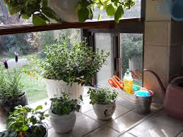 Kitchen Windowsill Herb Garden My Kitchen Window Just Plants Pinterest Kitchen Window Plants