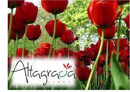 Resultat d'imatges de adornos florales naturales
