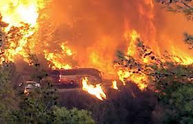 Afbeeldingsresultaat voor bosbranden israel