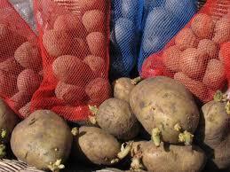 How to <b>Grow Potatoes</b> | how-tos | <b>DIY</b>