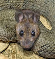 Image result for head mouse