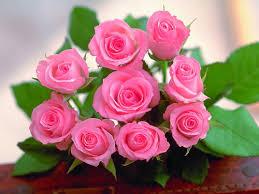 Kết quả hình ảnh cho hình ảnh hoa đẹp tặng ngày 27-2