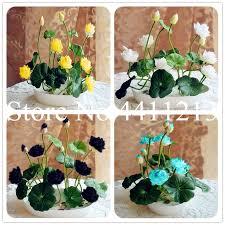 Hot Sale <b>10 pcs</b>/<b>pack</b> Rare <b>bowl lotus</b> Bonsai <b>hydroponic</b> plants ...