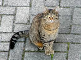 Image result for domestic cats