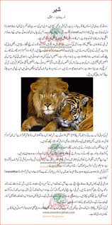 lion details in urdu for kids lions facts for kids lion details in urdu