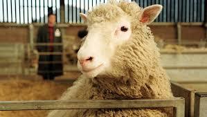 20 лет назад в результате клонирования родилась <b>овечка</b> Долли ...