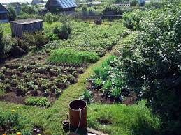 Image result for tolstoy dacha