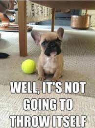 French Bulldog | Humor Hound via Relatably.com
