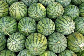 Image result for watermelon in a farm