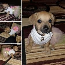 <b>Sunflower</b> Pet <b>Dog Dress</b> Summer <b>Pink</b> Princess <b>Flower</b> Baby Girl ...