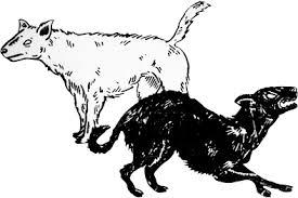Resultado de imagen de Los dos cadejos