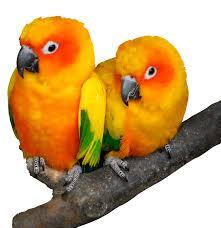 Товары для птиц купить в зоомагазине «ZOO-Express»