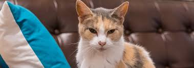 What is a Senior <b>Cat</b>? How to Spot Signs of Aging in <b>Cats</b> | Hill's Pet