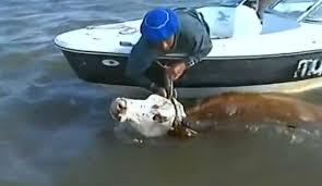 Resultado de imagen para inundaciones en argentina