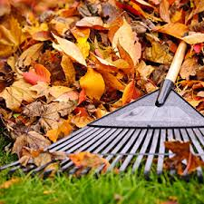 Image result for fall raking leaves images