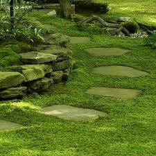 Image result for sheet moss