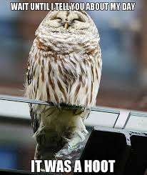 Delighted Owl - Funny Images and Memes To Fill You Up With Geeky ... via Relatably.com