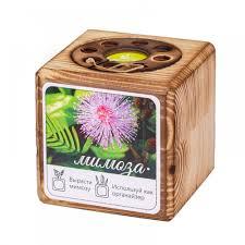 <b>Экокуб BURN</b> - набор для выращивания дерева в кубе купить ...