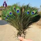 Павлиньи перья в декоре