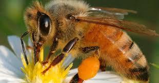 Se acaba nuestro mundo sin las abejas