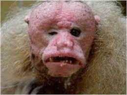 Resultado de imagem para fotos animais feios