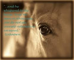 Image gallery for : the horse whisperer quotes