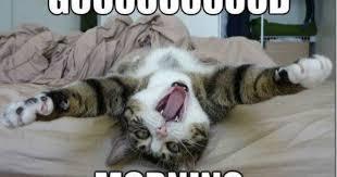 Morning Memes on Pinterest | Memes, Funny Morning and Kermit via Relatably.com