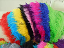 Plume Feathers Online Wholesale Distributors, Plume Feathers for ...