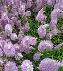 native flowering plants in the native flower garden brisbane office plants