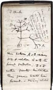 「Darwin's Theory of Gradual Evolution」の画像検索結果