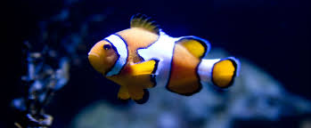 uncertain airspace changing career paths is disorienting and clownfish in blue water smaller
