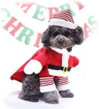 Funny Dog Costumes - Amazon.co.uk