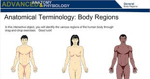 construction of free body diagrams   wisc online oeranatomical terminology  body regions