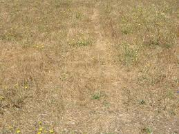 where to start on my yard full of weeds the home depot community i know i will have to throw some weed killer and rotatiller it but need advice on what is the best weed killer and best way to get the job done on a