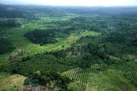 the environment in c ocirc te d ivoire challenges and opportunities deforestation and cultivation of forested land in cocircte d ivoire